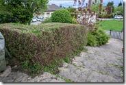 Aggressive hedge trimming