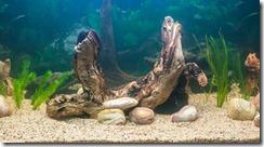 Reinstalling my aquarium