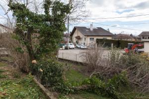 Cutting down the old prune tree