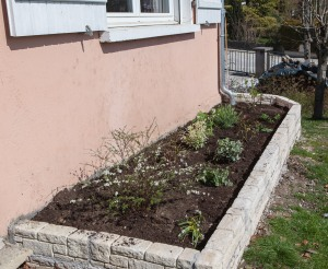 Spring plantation in the new flower bed