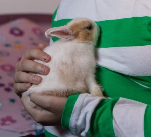 Timothy and Cassandra's rabbits
